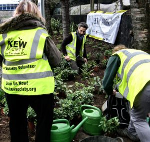 Kew Gardesn station planting Caroline Blomfield 236